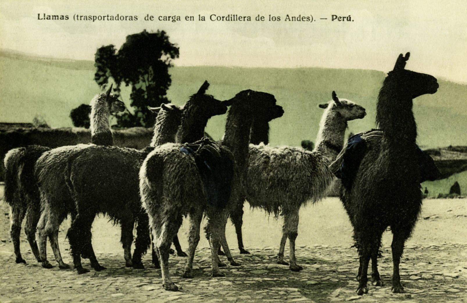 South American Postcard Collection