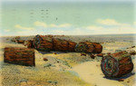 United States – Arizona – Adamana – Petrified Forest – Drift Logs in Second Forest