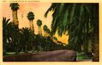 United States – California – A Palm Drive in California