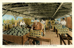 Packing Cantaloupes in the Imperial Valley