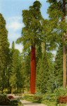 The California Tree.  Kings Canyon National Park, California