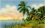 Coconut Palms, Florida