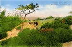 United States – California – La Jolla – Torrey Pines Park