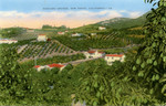 Avocado Groves, San Diego, California