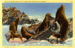United States – California – San Francisco – Near Cliff House – Seals on Rocks