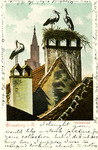 Strassburg - Storchennest