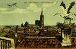 Strasbourg - Nid de Cigognes