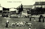 Saujon - La Foire aux Ouailles
