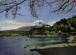 Japan –  Fuji San – Lake Shojin in Spring.