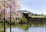 Japan –  Kyōto – The Garden of Heian-Jingu Shrine in Spring