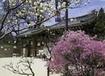 Korea –  Seoul – Secret Garden
