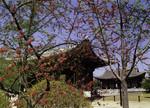 Korea - Seoul - Chunghwamun Gate in Deoksugung Palace