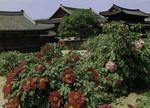 Korea –  Seoul – Tŏksugung Palace