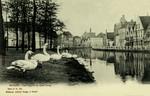 Bruges - Les Cygnes au Quai Long