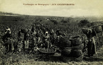 "Igornay - Vendanges en Bourgogne ""Aux Champimonts"""