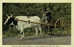 Gaspé – A typical Gaspesian Ox Cart