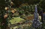 Victoria – The Butchart Gardens, Delphinium Time