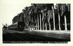 Panama – Palms at Slifer Park, Colon. R.P.