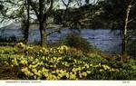 Ullswater – Wordsworth's Daffodils