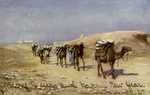 Egypt – Camels carrying stone, near Cairo