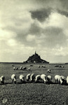 Mont-St-Michel - Les Prés-Salés