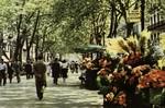 Barcelona - Rambla de las Flores.