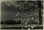 Montreux - Au bord du Lac Léman