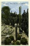 California – Cactus Garden, White's Park, Riverside