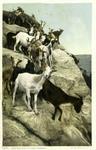 Arizona – Goats in Hopi Village