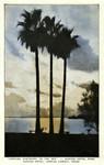 """Texas – """"Looking Eastward to the Sea"""" – Nueces Hotel Park, Nueces Hotel, Corpus Christi"""