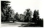 United States – California – Menlo Park – Convent of the Sacred Heart – East Driveway